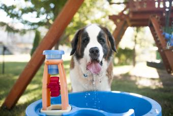 Dog drinking water from container at playground