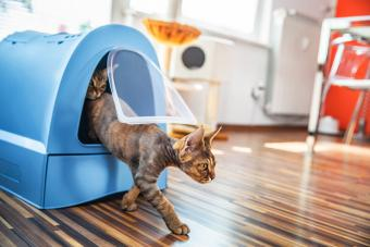 Cat Stepping Out of Closed Litter Box