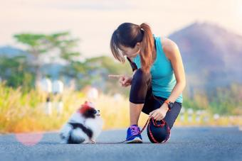 Owner giving commands while running
