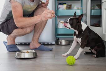 Man feeding his dog