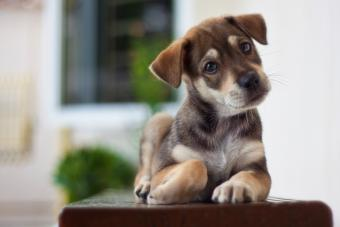 Cute mongrel puppy