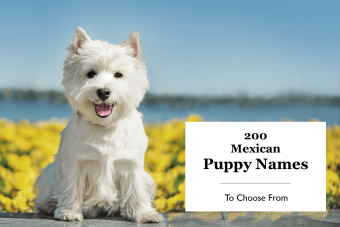 200 Mexican Puppy names
