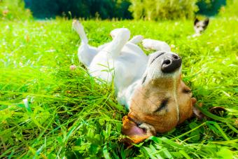 Dog relaxing park