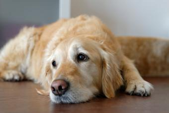 Signs a Dog Has Difficulty Recovering From a Seizure