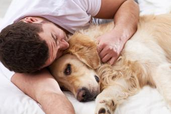 How to Recognize a Dying Dog in the Final Moments