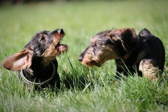Dogs On Field