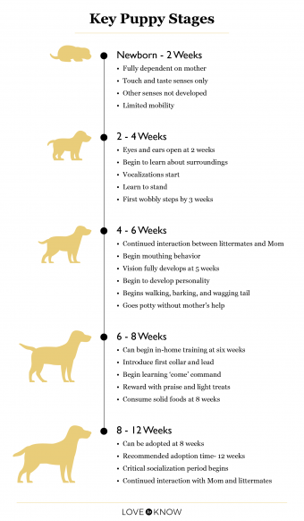 Key Puppy Stages