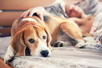 Warning Signs a Dog Is Dying