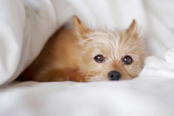How Do You Know When Your Dog Is About to Give Birth?
