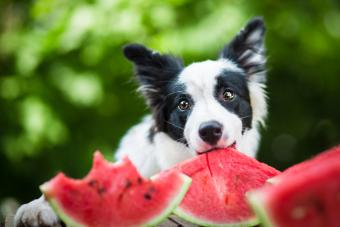 Diet for Dogs With Canine Liver Disease