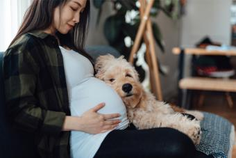 Pregnant Woman Relaxing At Home With Dog