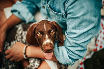 person holding German shorthaired pointer