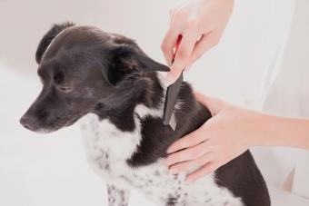 Vet Combing Dog's Hair