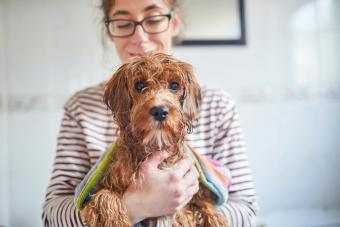 How to Clean a Dog (and Have the Freshest Pup in Town)
