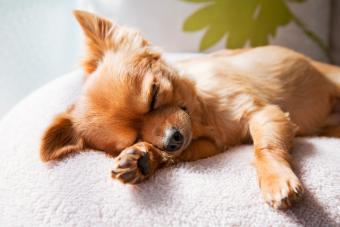 dog sleeping on cushion