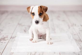 4 Effective Ways to Remove Urine Odor From Puppy Fur