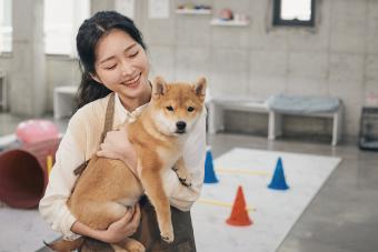 A Pet Sitter Holding a Shiba Inu