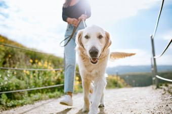 Young Woman Walks Her Dog