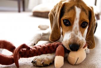 How to Stop a Dog From Chewing in Gentle (but Effective) Ways