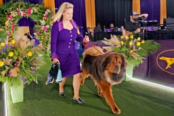 dog and handler enter the ring to compete