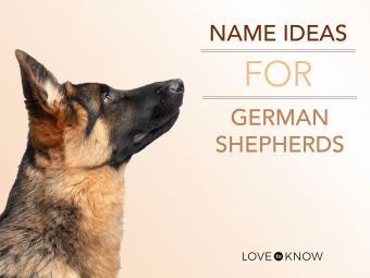 Name ideas for a german shepherd dog