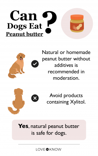 Can dog eat peanut butter infographic