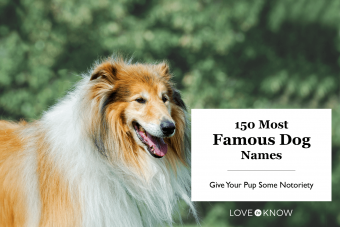 Most Famous Dog Names of All Time