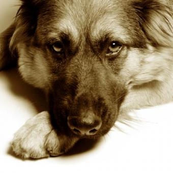 Disciplining a Submissive Dog