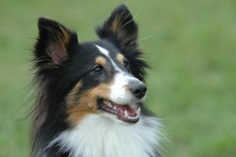 3 Main Dog Obedience Training Methods