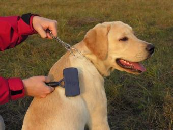 Dog Grooming Trouble and Tranquilizer Use