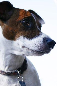 Anxiety in Small Dogs