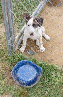 Dog in a kennel with no water
