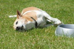 Dog Has Digestive Problems