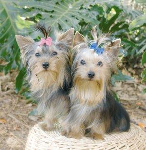 Herbs and Vitamins for Hair Growth in Dogs