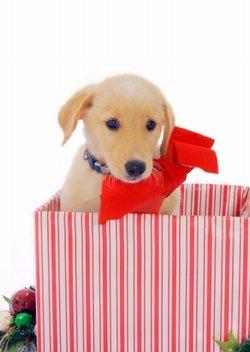 Christmas puppy surprise