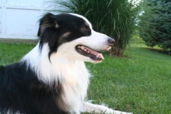 7 Practical Ways to Relieve Itching in Dogs