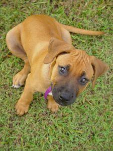 Mixed breed puppy sitting in the grass