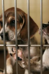 caged puppies