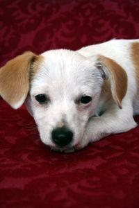 Innocent looking pup