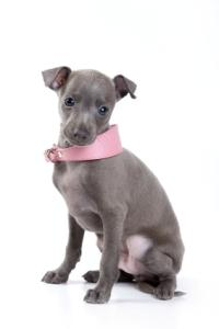 Fashionable Dog Collars and Where to Find Them