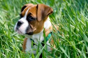 Can You Train Your Dog to Be Assertive?