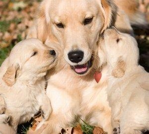 Dam and pups