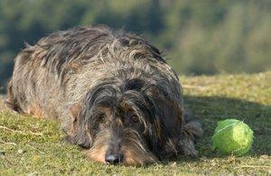 Could your dog have worms?
