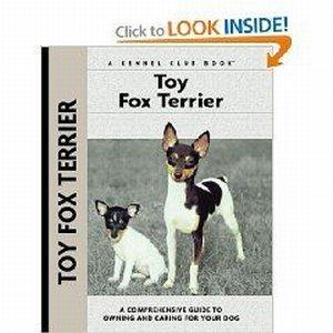 All About the Playful Toy Fox Terrier