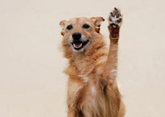 Dog Paws Health Care Tips