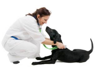 4 Canine Osteosarcoma Treatment Options