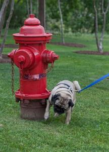 Tips for Resolving Your Dog's Incontinence