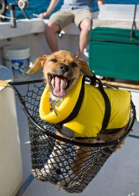 Overview of Dog Life Jackets and Where to Find Them