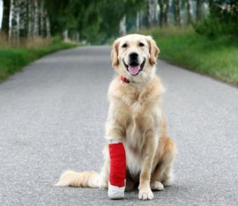 Practical Care Tips for Injured Dogs