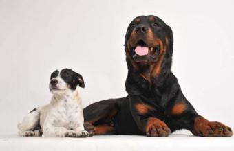 The Most Important Canine Kidney Disease Facts